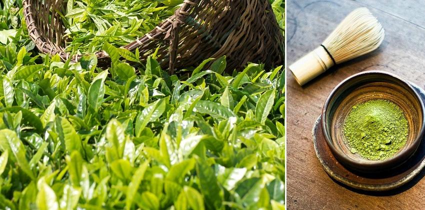 cách làm bột trà xanh tại nhà 20 cách làm bột trà xanh tại nhà Cách làm bột trà xanh tại nhà đơn giản mà chất lượng cach lam bot tra xanh tai nha 20