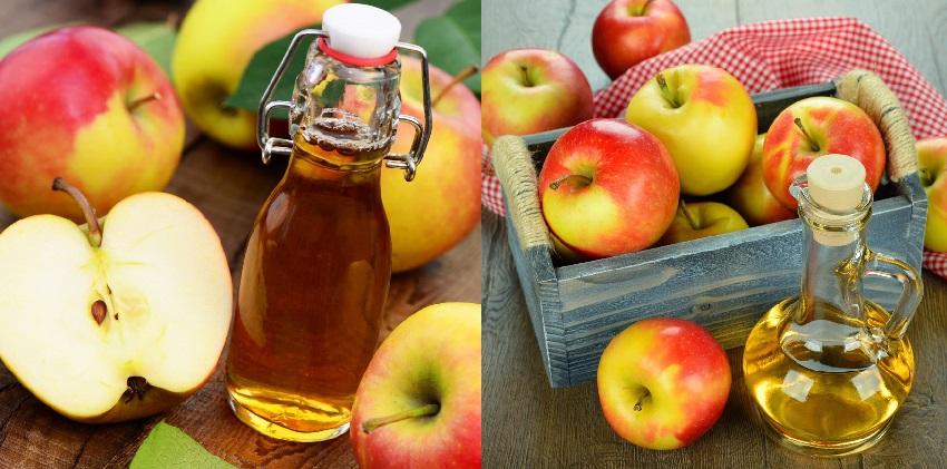 cách làm dấm táo giảm cân 6 cách làm dấm táo giảm cân Cách làm dấm táo giảm cân vô cùng hiệu quả ngay tại nhà cach lam dam tao giam can vo cung hieu qua ngay tai nha 4