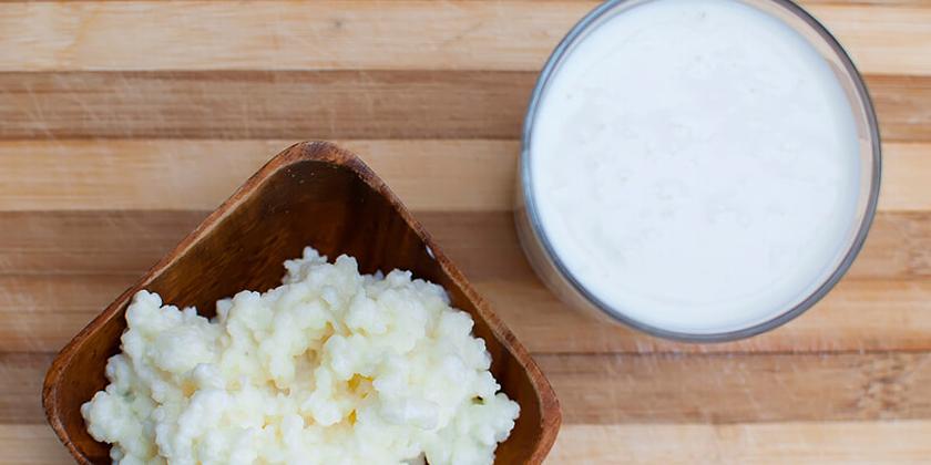 cách làm sữa chua từ nấm kefir Cách làm sữa chua từ nấm Kefir thơm ngon dinh dưỡng cach lam sua chua tu nam kefir