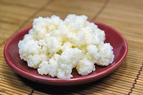 kinh nghiem nuôi nấm kefir kinh nghiệm nuôi nấm kefir Kinh nghiệm nuôi nấm kefir cho người mới bắt đầu luu y khi nuoi nam kefir