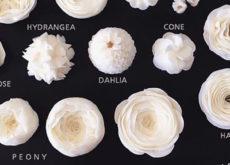 Lưu lại những mẫu hoa kem bơ Hàn Quốc hot nhất không thể bỏ qua-8433  8 mẫu hoa kem bơ Hàn Quốc phổ biến nhất trong trang trí bánh tong hop nhung mau hoa kem bo dep nhat nam 2017 89 1 230x165