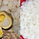 hạt đác là gì hạt đác là gì Hạt đác là gì? Công dụng và các cách chế biến hạt đác 1 1 150x150