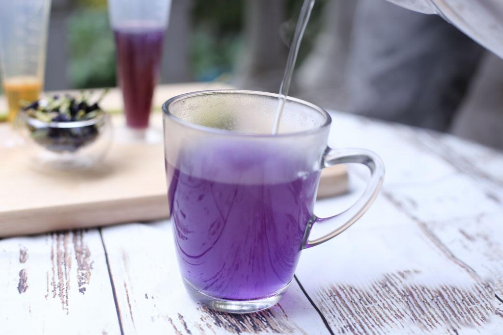 cách làm trà hoa đậu biếc cách làm trà hoa đậu biếc Cách làm trà hoa đậu biếc màu xanh dịu mát hot nhất hè 2018 Tra hoa dau biec 12 1