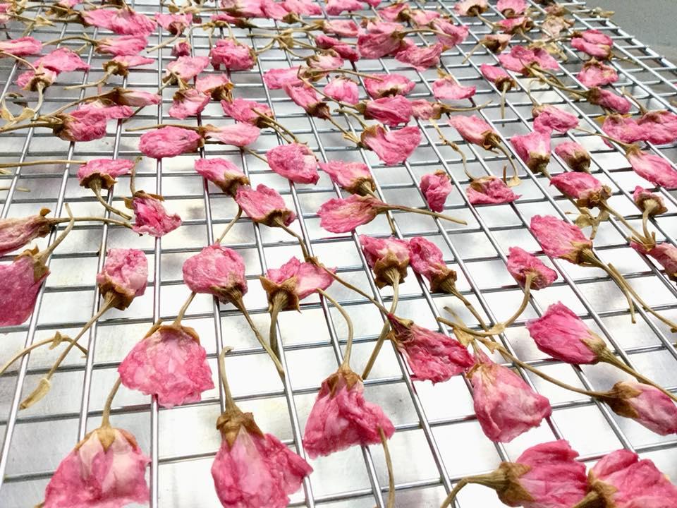 cách làm hoa anh đào muối cách làm hoa anh đào muối Cách làm hoa anh đào muối truyền thống đậm đà hương vị Nhật cach lam hoa anh dao muoi 17