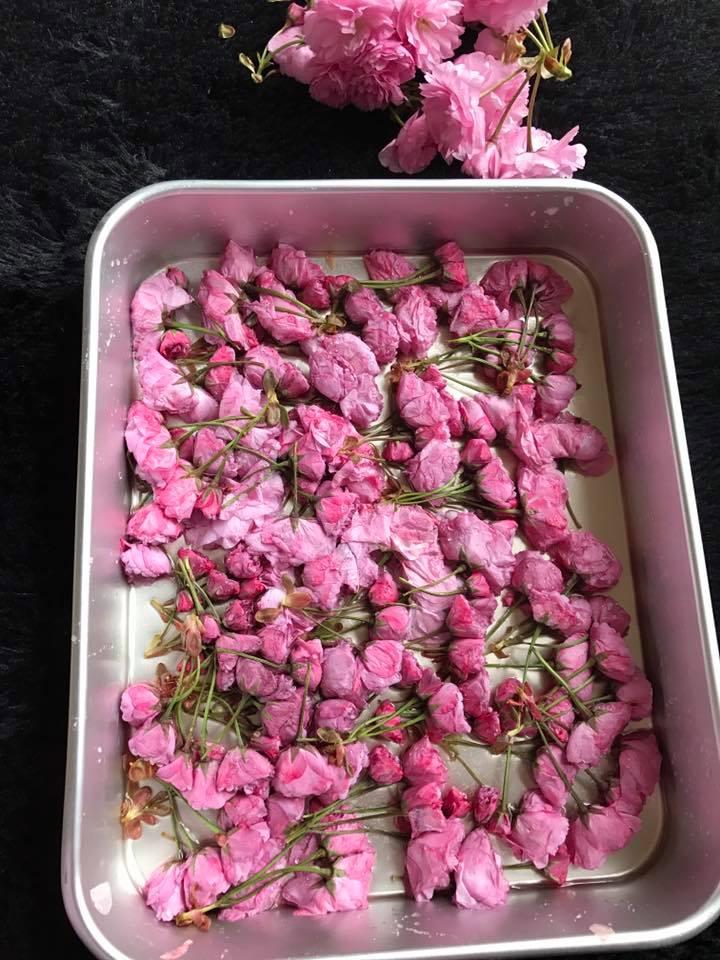 cách làm hoa anh đào muối cách làm hoa anh đào muối Cách làm hoa anh đào muối truyền thống đậm đà hương vị Nhật cach lam hoa anh dao muoi 7