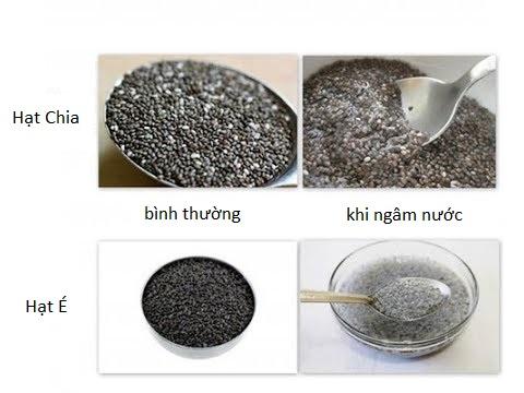 hạt é 5 hạt é Hạt é có công dụng tuyệt vời gì? Phân biệt hạt é và hạt chia hat e 5
