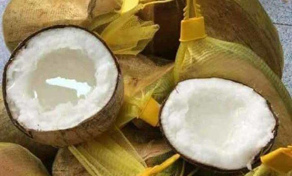 sinh-to-dua sinh tố dừa Cách làm sinh tố dừa sáp ngon không cần chỉnh dua sap e1569393033491
