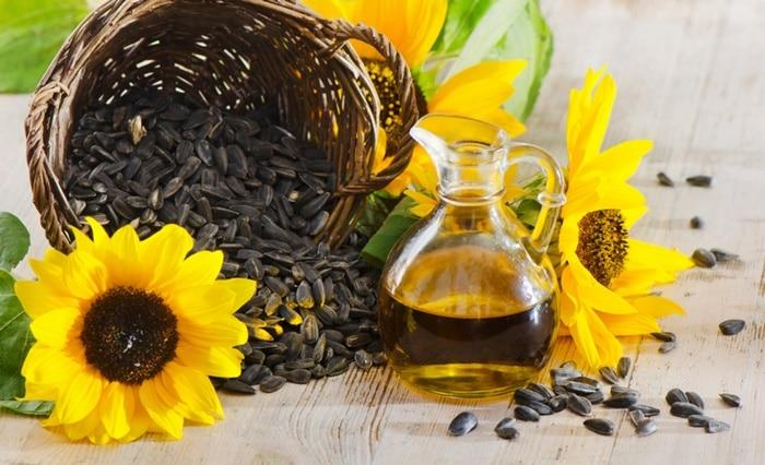 Dầu hướng dương có nên dùng dầu hướng dương Lý giải có nên dùng dầu hướng dương trong nấu ăn hay không dau huong duong 1