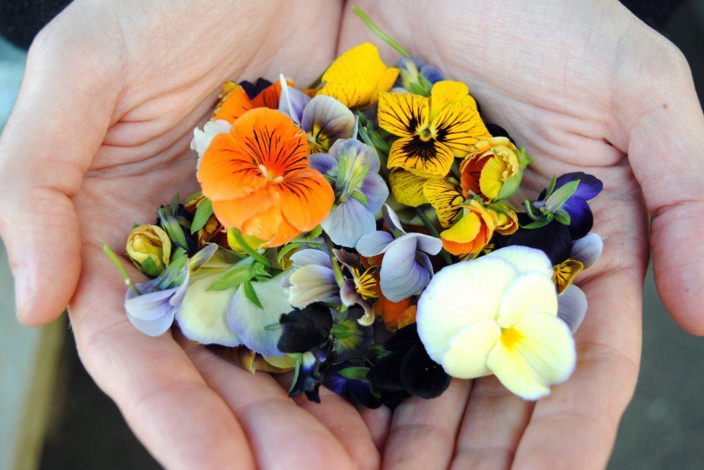 ứng dụng của hoa ăn được trong làm bánh